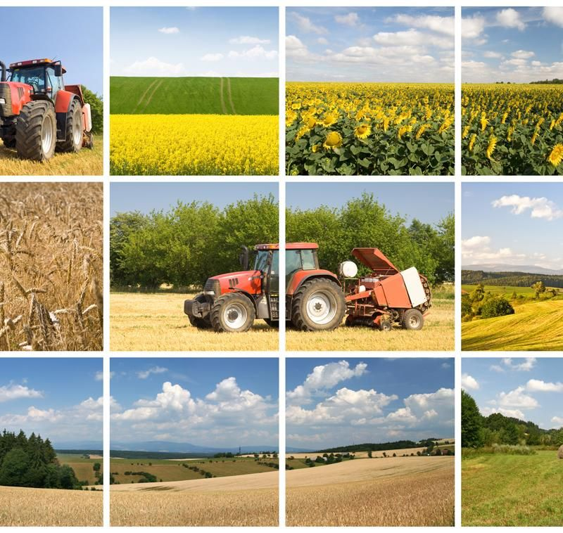 media-file-296-agricultura-collage.jpg